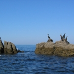 oiseaux-quiberon-morbihan-bretagne-cormorans-huppes-1