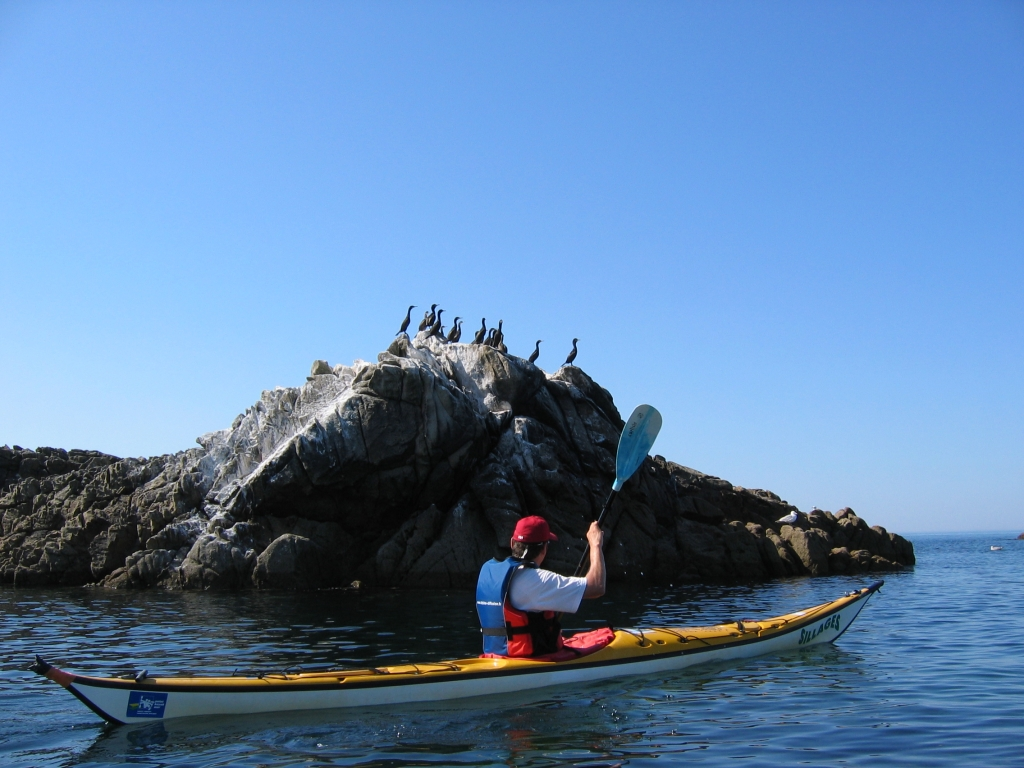 birds-sea-kayak-family-quiberon-morbihan-brittany-canoe-nature-cote-sauvage