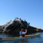 pétole-glassy-kayak-carnac-quiberon-morbihan-bretagne-mer_decouverte-milieu-marin-nature-4