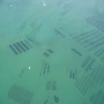 parcs-huitres-baie-de-quiberon-vue-aerienne