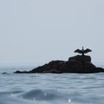 portivy-sillages-kayak-de-mer-bretagne-morbihan-quiberon-carnac-randonnee-cormoran