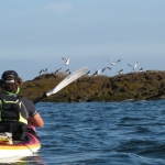SILLAGES-Kayak-Stand-up-paddle-Quiberon-morbihan-bretagne-23