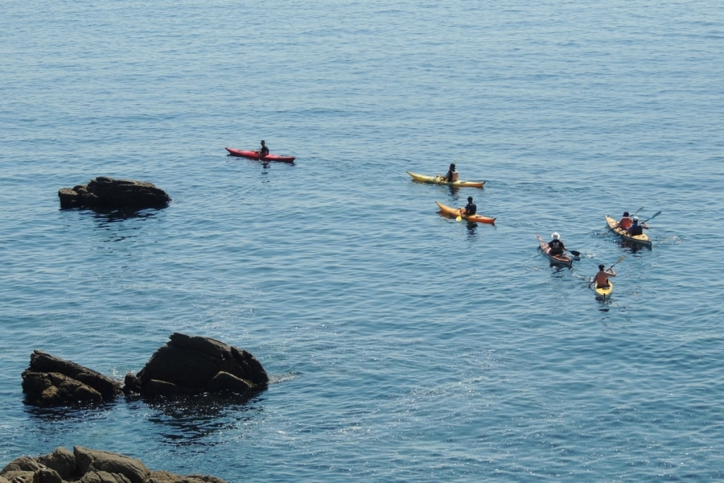 First experience birds-sea-kayak-family-quiberon-morbihan-brittany-canoe-nature-cote-sauvage